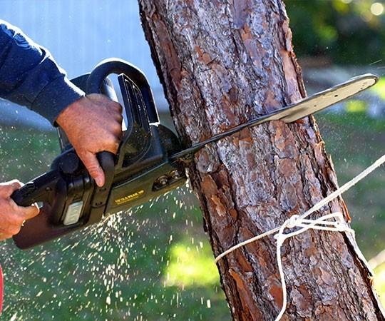 Спил деревьев в Челябинске и Челябинской области