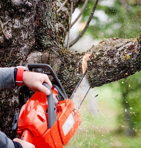 Услуга по спиливанию деревьев в Челябинске